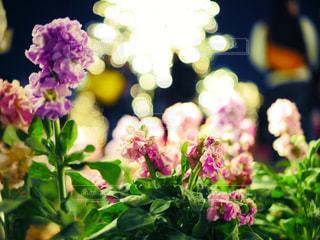 近くの花のアップの写真・画像素材[1022676]