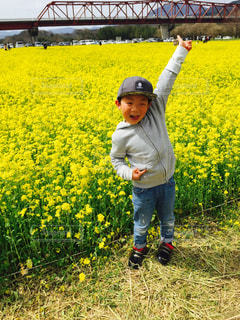 黄色の世界 - No.1098102