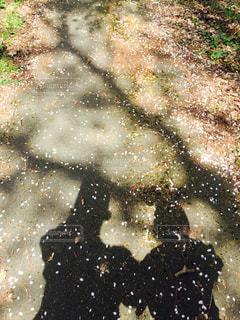桜散るの写真・画像素材[1098116]