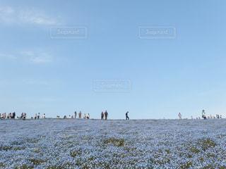 春の丘の過ごし方の写真・画像素材[1026380]