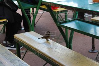 ピクニック テーブルの上に座っているスズメ - No.1023018