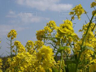 花の写真・画像素材[1023078]