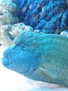 水面下を泳ぐ魚たちの写真・画像素材[1023927]