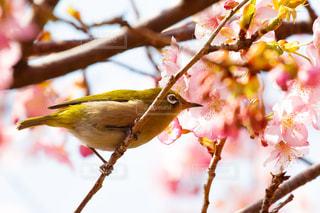 木の枝に小鳥の写真・画像素材[1027022]