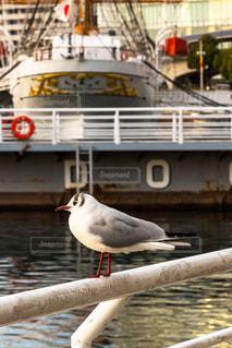 ドックに座っている鳥の写真・画像素材[1063684]