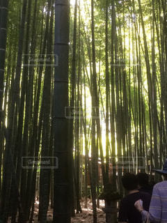 日光差し込む竹林の写真・画像素材[2564064]
