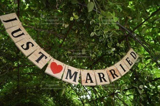 結婚式の写真・画像素材[33653]