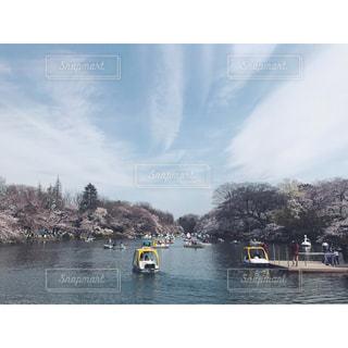桜と池とボートの写真・画像素材[1024915]