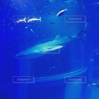 水族館のジンベイザメと魚の写真・画像素材[1025078]