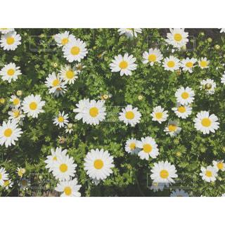 近くに黄色い花のアップの写真・画像素材[1025157]
