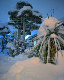 近く雪に覆われた木のアップ - No.1025438