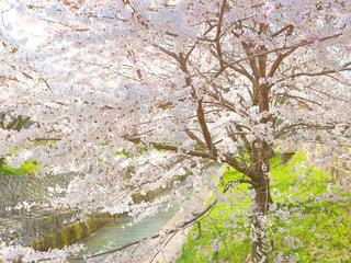 近くの木のアップの写真・画像素材[1125843]