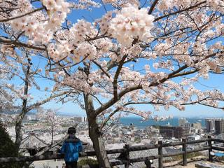 滋賀県三井寺の写真・画像素材[1143514]
