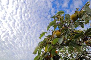雲揺られ恵の自然と秋の空〜の写真・画像素材[1494469]
