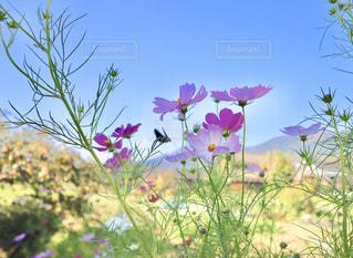 近くの花のアップの写真・画像素材[1509086]