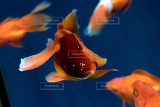 水面下を泳ぐ魚たちの写真・画像素材[1028574]