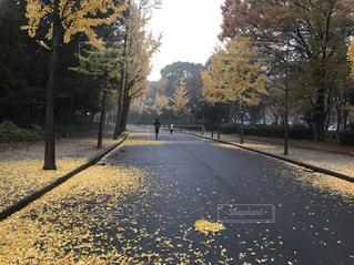 通り側の木と空の道の写真・画像素材[1034508]