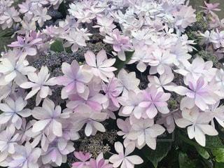 お花畑 - No.52009