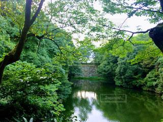 水に囲まれた大きな木 - No.710287