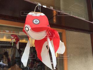 和紙金魚の写真・画像素材[1026724]