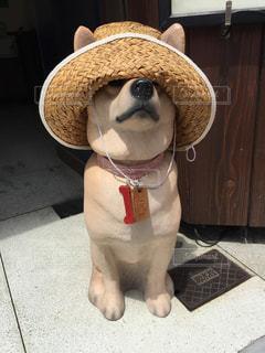 麦わら帽子を被った犬の写真・画像素材[1026725]