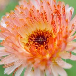 花の写真・画像素材[44826]