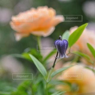 花の写真・画像素材[44840]
