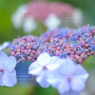 花の写真・画像素材[45676]