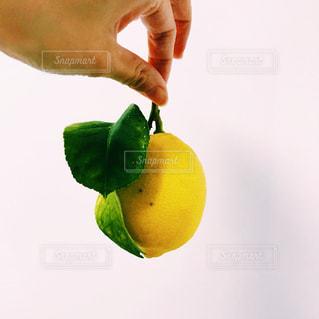 レモンを持っている人の写真・画像素材[1027182]