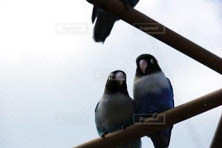 枝の上に座って鳥の写真・画像素材[1028365]