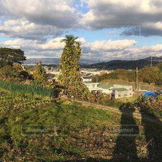 背景の木と大規模なグリーン フィールドの写真・画像素材[1027723]