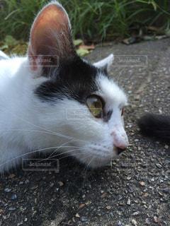 猫の視線の写真・画像素材[1027543]