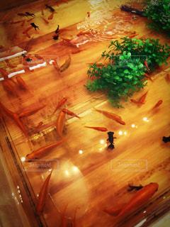 金魚すくいの写真・画像素材[1027600]