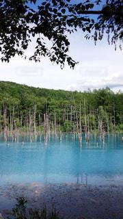 青い池の写真・画像素材[1028158]