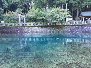 青い池の写真・画像素材[1028170]