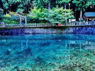 美しい池の写真・画像素材[1028262]