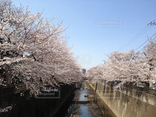 花見日和の写真・画像素材[1028216]