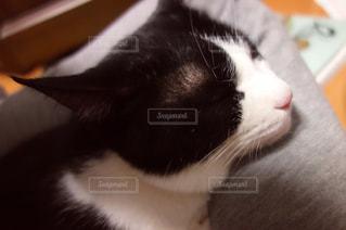 近くに猫のアップの写真・画像素材[1030873]