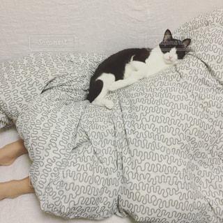 ベッドの上で横になっている猫の写真・画像素材[1030874]