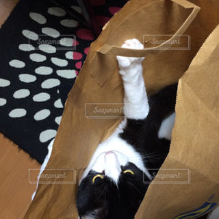 紙袋の中の猫の写真・画像素材[1030876]