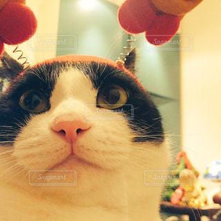 近くに猫のアップの写真・画像素材[1030881]