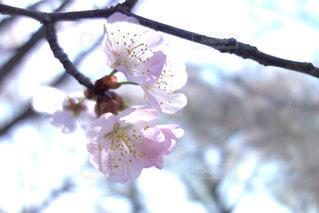 近くの花のアップの写真・画像素材[1108757]