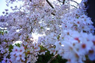近くの花のアップの写真・画像素材[1108759]