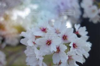 近くの花のアップの写真・画像素材[1108761]