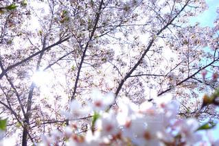 近くの木のアップの写真・画像素材[1113714]