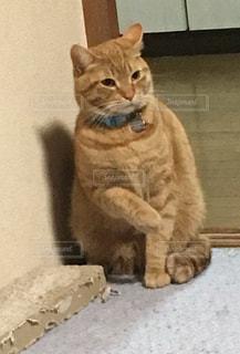 何かを言いたそうな猫の写真・画像素材[1028970]