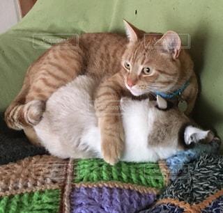 ベッドの上で横になっている猫の写真・画像素材[1028972]
