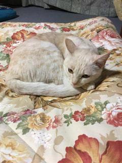 ベッドの上で眠っている猫の写真・画像素材[1030073]