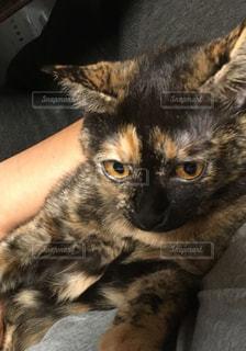 猫の写真・画像素材[1030087]