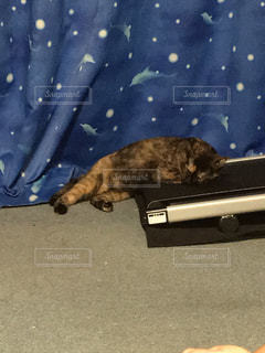 ランニングマシーンに寄り添って寝る猫の写真・画像素材[1030088]